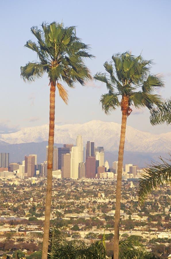 Dos palmeras, Los Ángeles y soporte nevoso Baldy según lo visto de Baldwin Hills, Los Ángeles, California imagen de archivo
