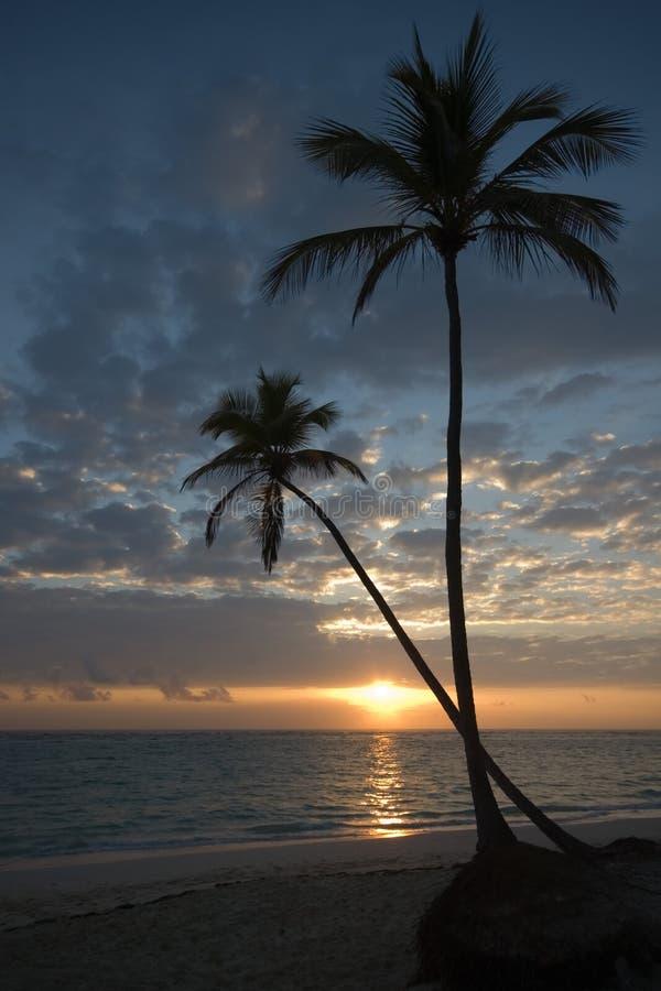 Dos palmeras, playa, salida del sol imágenes de archivo libres de regalías