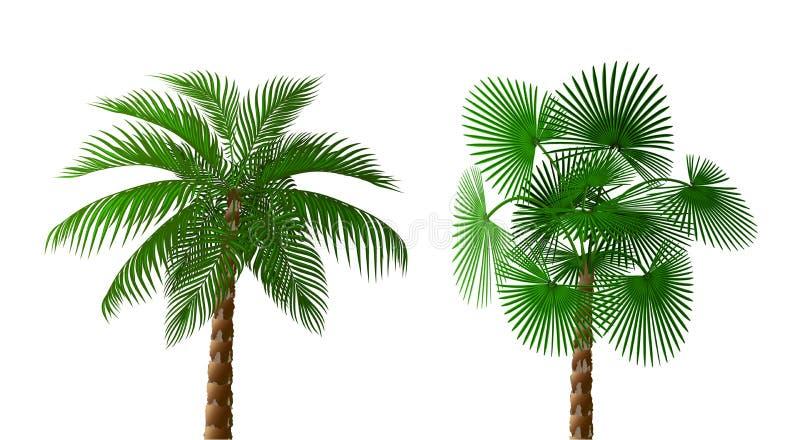 Dos palmeras verde oscuro enormes tropicales de diversos tipos Ilustraci?n stock de ilustración