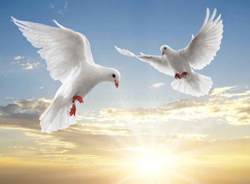 Dos palomas imágenes de archivo libres de regalías