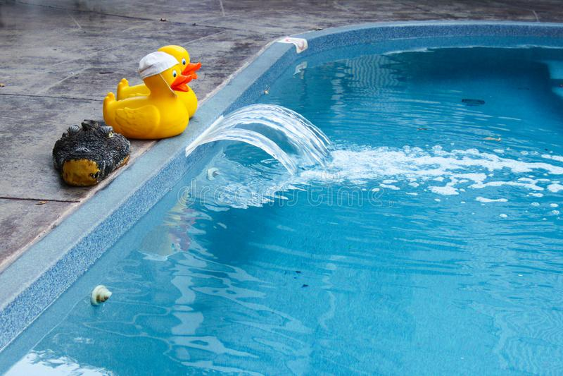 Dos patos de goma y un cocodrilo de goma dirigen en el borde de la piscina fotos de archivo