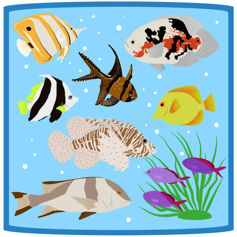 Dos peixes tropicais coloridos do recife de corais de Oceanarium ícones lisos ilustração royalty free
