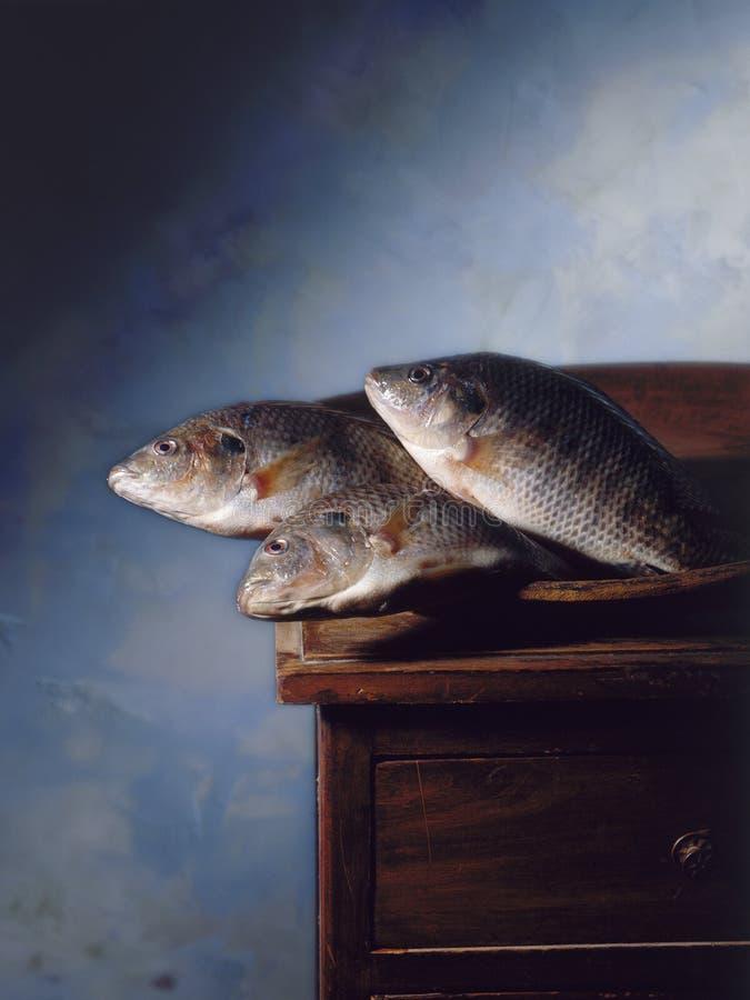Dos peixes vida ainda fotografia de stock