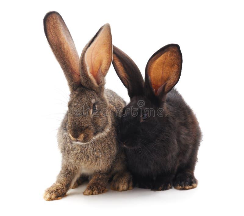 Dos pequeños conejos imágenes de archivo libres de regalías
