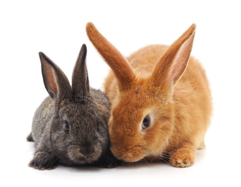 Dos pequeños conejos imagen de archivo libre de regalías