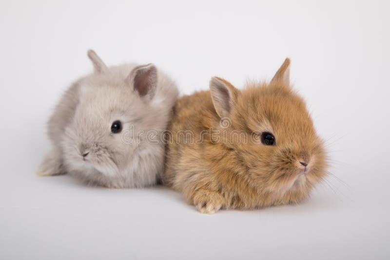 Dos pequeños conejos fotos de archivo