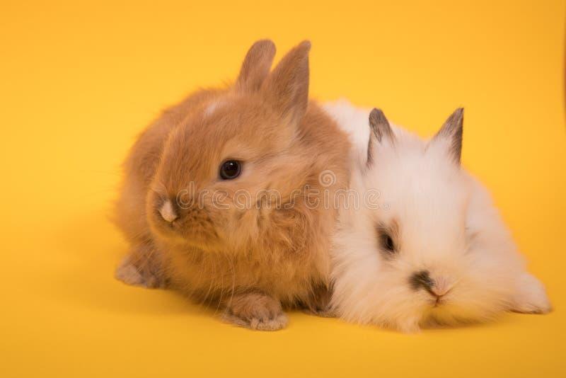 Dos pequeños conejos foto de archivo