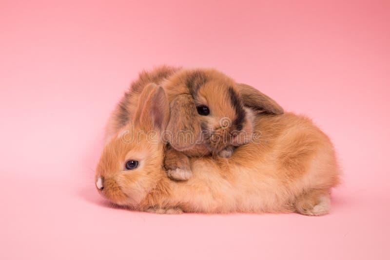 Dos pequeños conejos imagenes de archivo