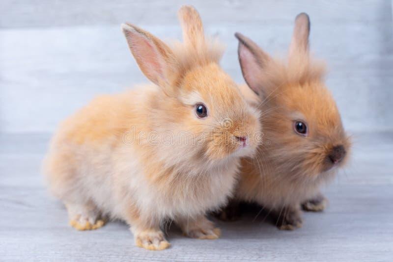 Dos pequeños conejos de conejito permanecen en fondo de madera gris del modelo con diversas posiciones imagen de archivo