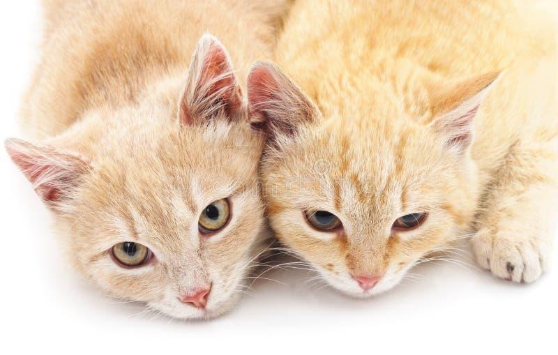 Dos pequeños gatitos fotografía de archivo libre de regalías