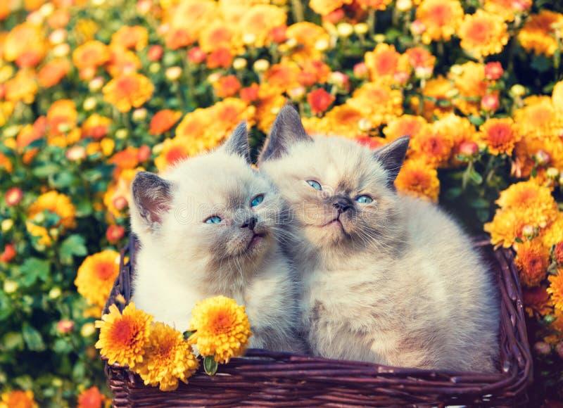 Dos pequeños gatitos que se sientan en una cesta cerca de las flores anaranjadas imágenes de archivo libres de regalías
