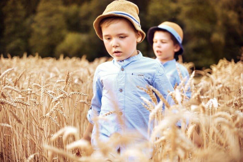 Dos pequeños hermanos que caminan entre el cereal imágenes de archivo libres de regalías
