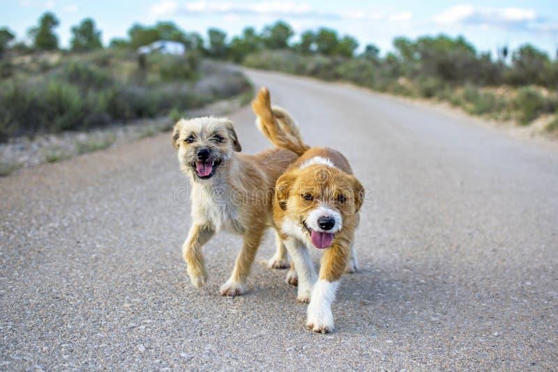 Dos pequeños perros perdidos abandonaron solo en el camino imágenes de archivo libres de regalías