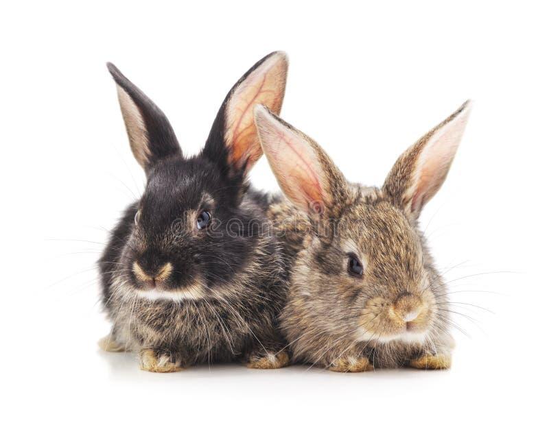 Dos peque?os conejos foto de archivo libre de regalías