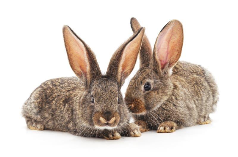 Dos peque?os conejos imagen de archivo libre de regalías
