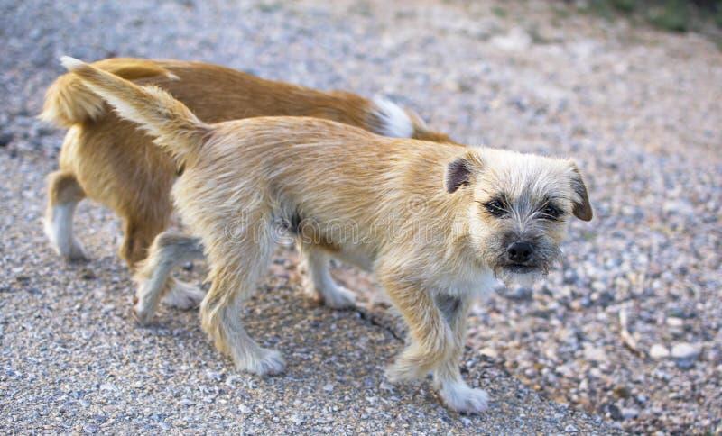 Dos peque?os perros perdidos abandonaron solo en el camino imágenes de archivo libres de regalías