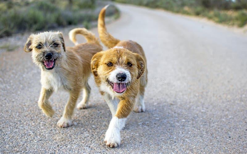 Dos peque?os perros perdidos abandonaron solo en el camino imagen de archivo libre de regalías