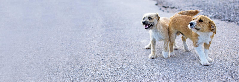 Dos peque?os perros perdidos abandonaron solo en el camino fotos de archivo libres de regalías