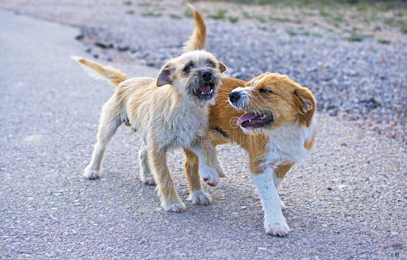 Dos peque?os perros perdidos abandonaron solo en el camino foto de archivo libre de regalías