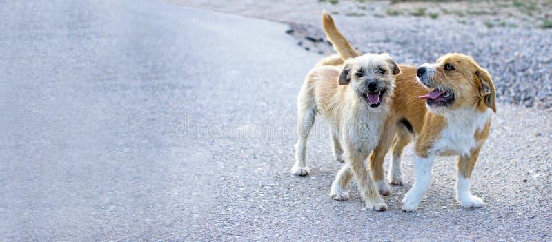 Dos peque?os perros perdidos abandonaron solo en el camino fotos de archivo