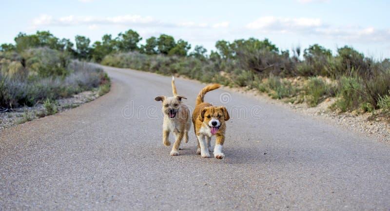 Dos peque?os perros perdidos solos en la carretera de asfalto foto de archivo libre de regalías
