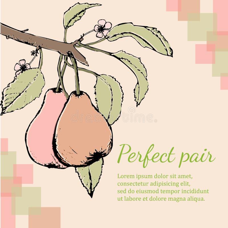 Dos peras y flores en rama Estilo del grabar en madera stock de ilustración