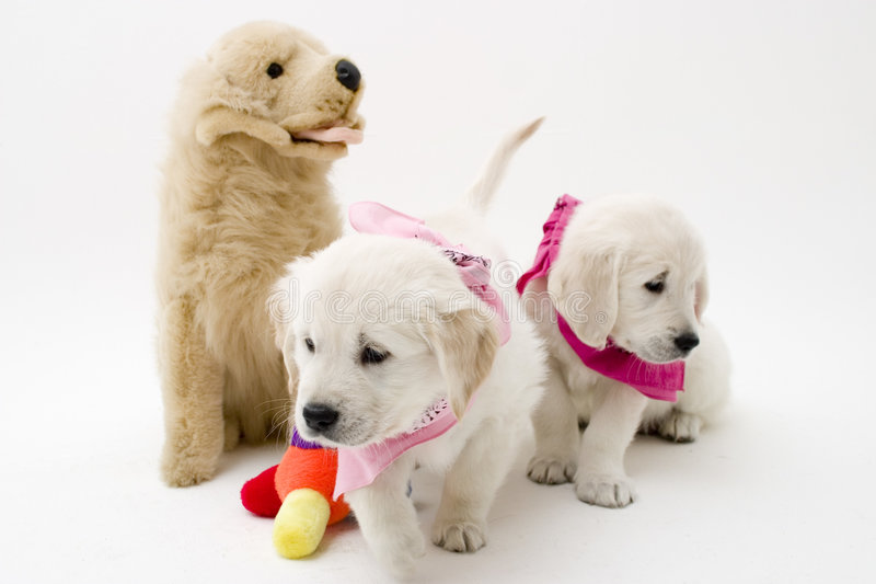Dos perritos fotografía de archivo libre de regalías