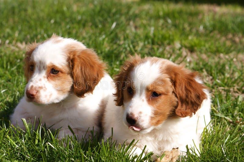 Dos perritos fotos de archivo