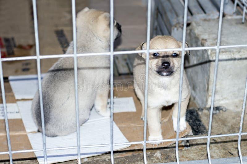 Dos perritos beige detrás de la cerca en el refugio imagen de archivo libre de regalías