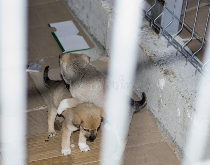 Dos perritos beige juegan en el refugio imagen de archivo