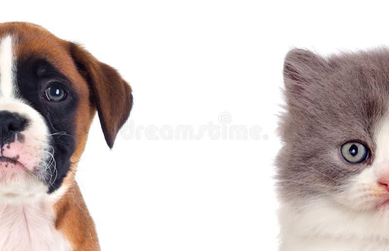 Dos perritos hermosos, un gato y un perro imagen de archivo