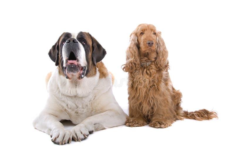 Dos perros fotografía de archivo