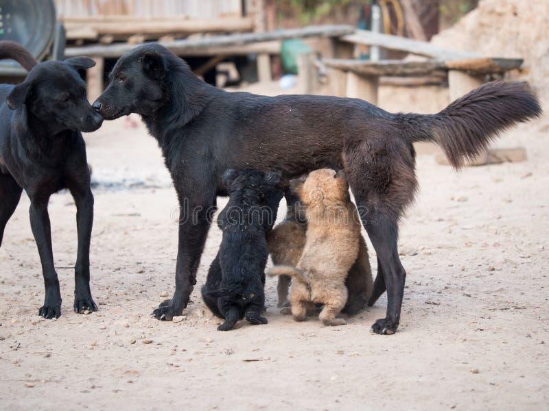 Dos perros callejeros negros colocan la nariz para sospechar con un pequeño perrito foto de archivo libre de regalías