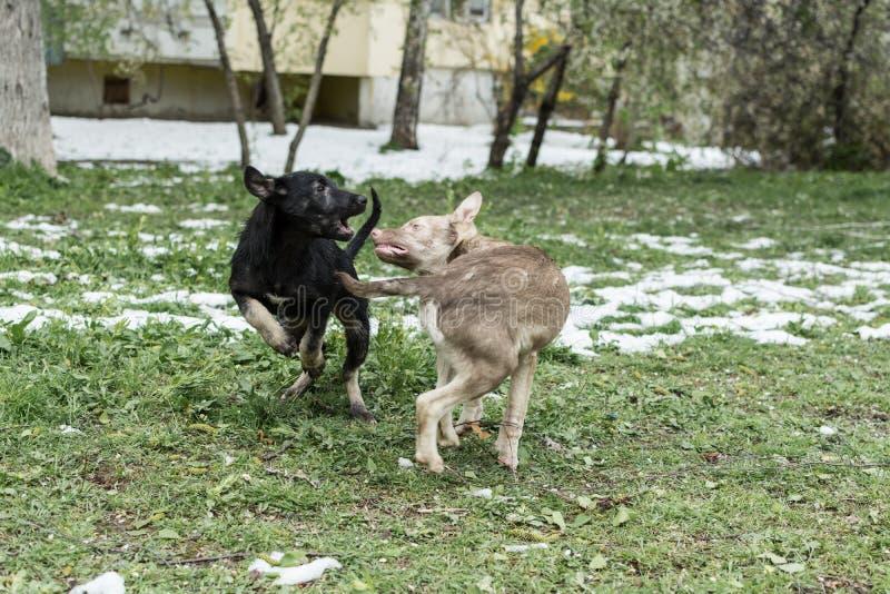 Dos perros de la calle fotografía de archivo libre de regalías