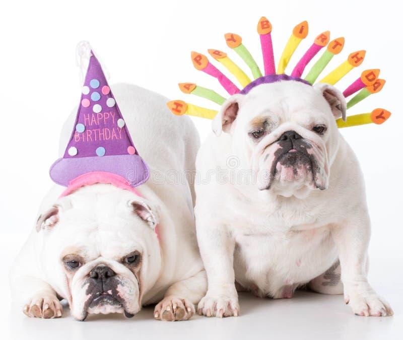 Dos perros del cumpleaños fotografía de archivo libre de regalías