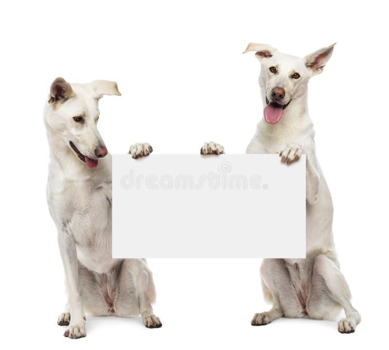 Dos perros del híbrido que se sientan y que se sostienen foto de archivo libre de regalías
