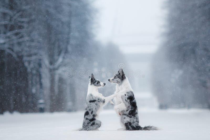 Dos perros junto, amistad en la naturaleza en invierno fotografía de archivo libre de regalías