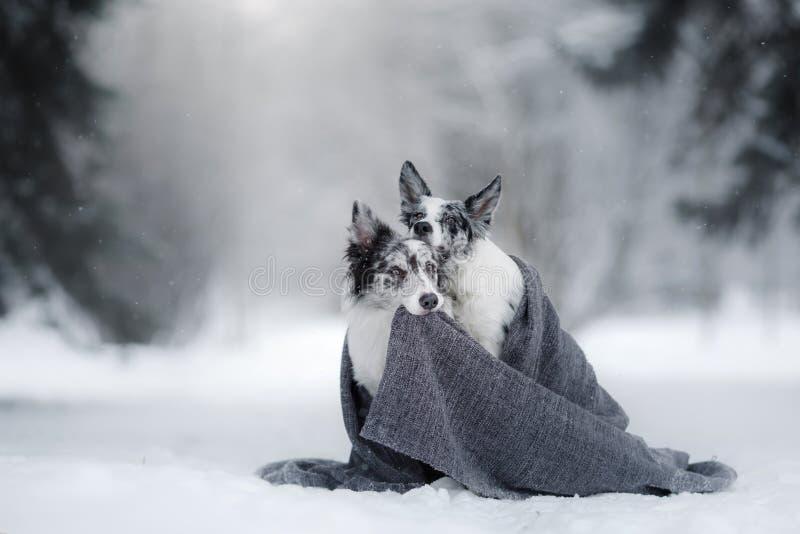 Dos perros junto, amistad en la naturaleza en invierno fotos de archivo