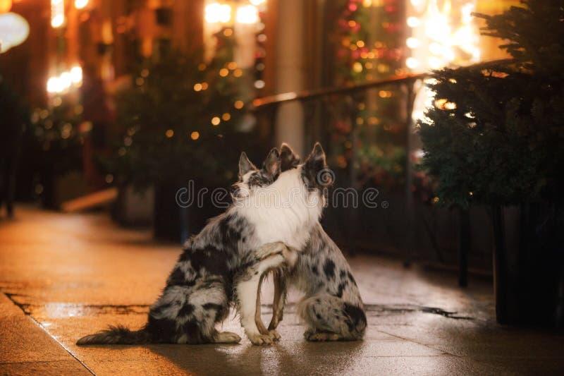 Dos perros junto en la ciudad por la tarde Amor y amistad foto de archivo