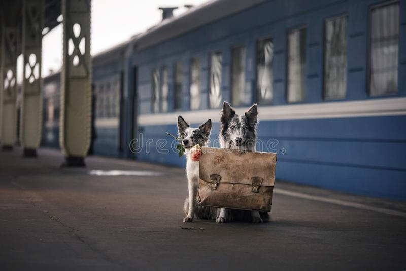 Dos perros junto Encuentro en la estación travelling fotografía de archivo libre de regalías
