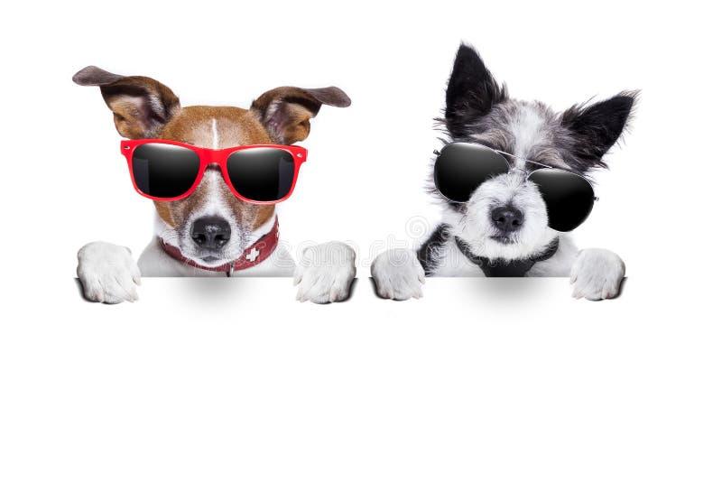Dos perros muy cerca junto fotos de archivo libres de regalías