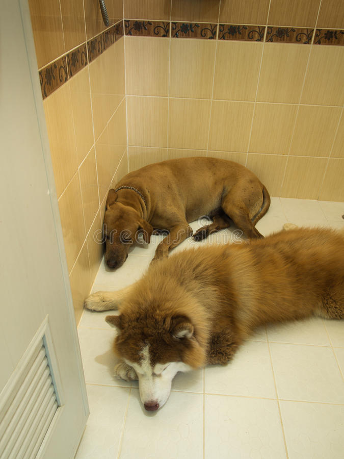 Dos perros que mienten en el cuarto de baño imágenes de archivo libres de regalías