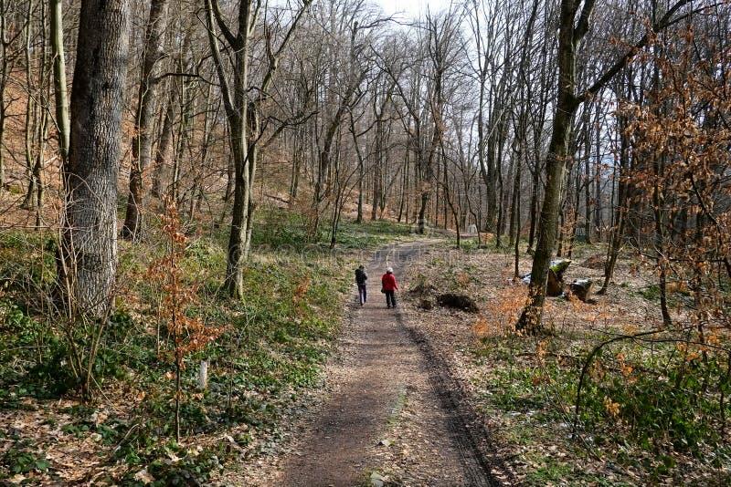 Dos personas que caminan en el bosque en pista de senderismo Calzada en bosque imagen de archivo libre de regalías