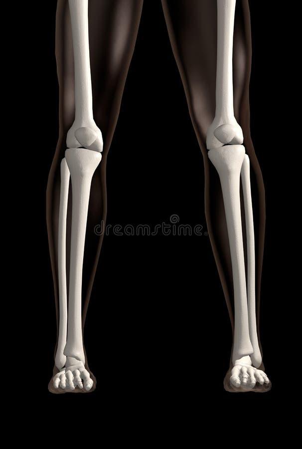 Dos piernas esqueléticas sobre negro imagen de archivo