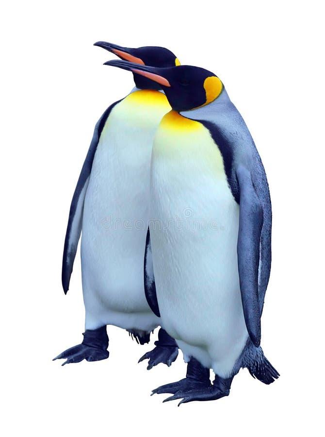 Dos pingüinos de emperador aislados con el camino de recortes fotografía de archivo