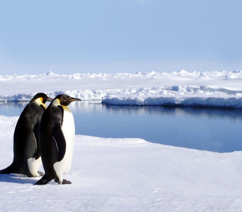 Dos pingüinos en Ant3artida imagen de archivo