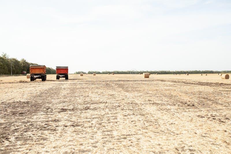 Dos pistas que cosechan trigo en campo soleado, rural imágenes de archivo libres de regalías