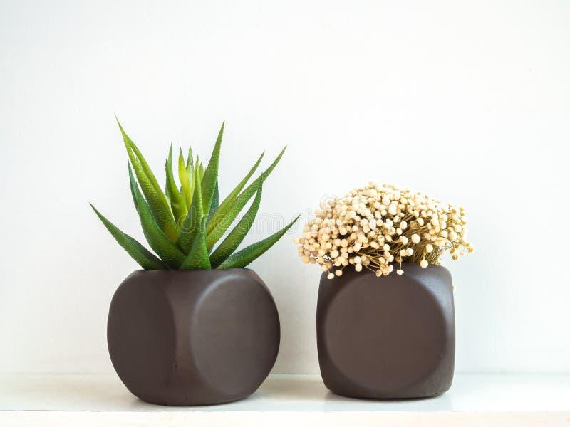 Dos plantadores concretos geométricos pintados marrones con la planta y la flor suculentas Potes concretos pintados para la decor imagenes de archivo