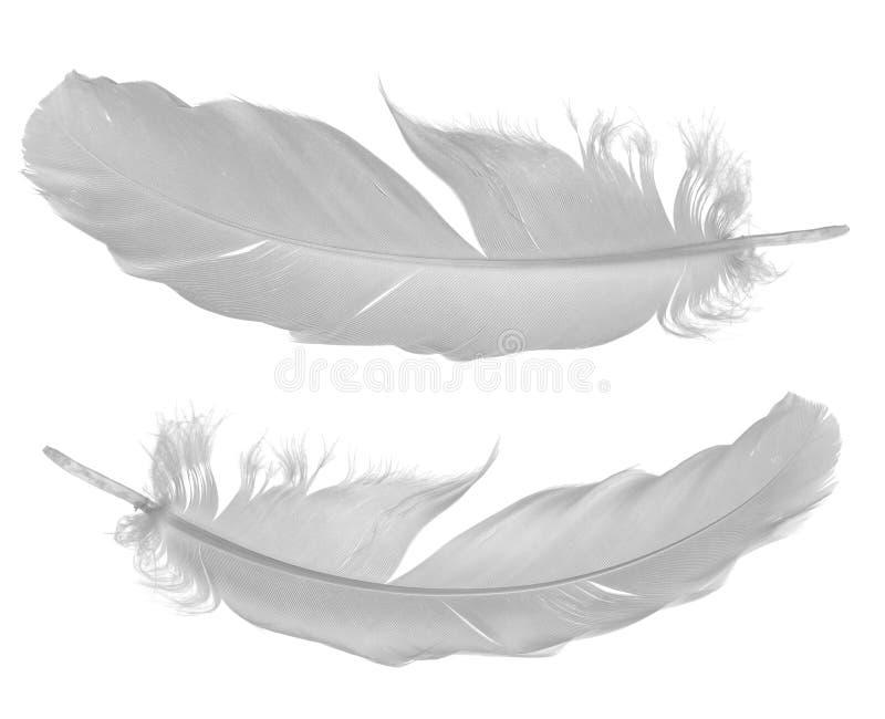 Dos plumas de la paloma en blanco fotografía de archivo libre de regalías