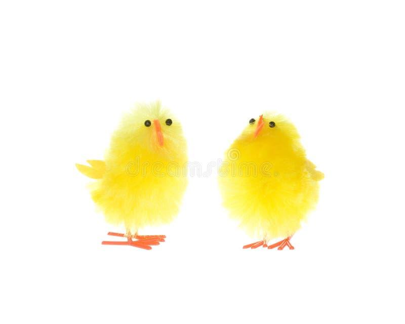 Dos polluelos amarillos aislados imagenes de archivo
